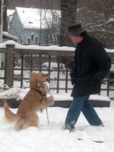 Honey the golden retriever plays out in the snow.