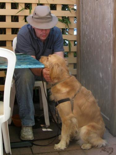 Honey the golden retriever at a pet-friendly restaurant.