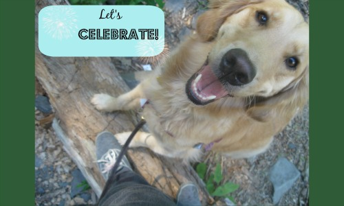 Honey the golden retriever likes to celebrate the little things.