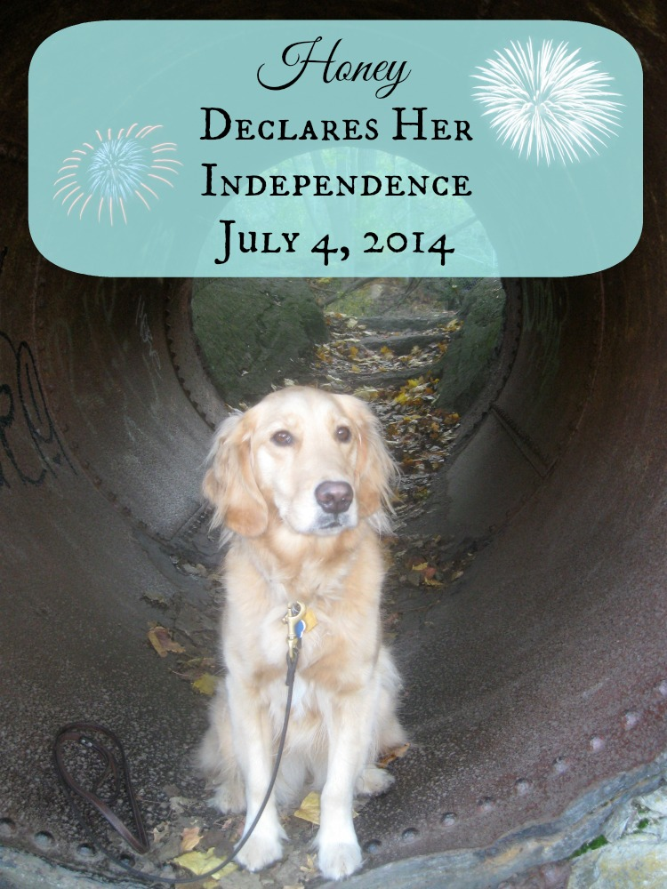 Honey the Golden Retriever declares her independence on july 4.