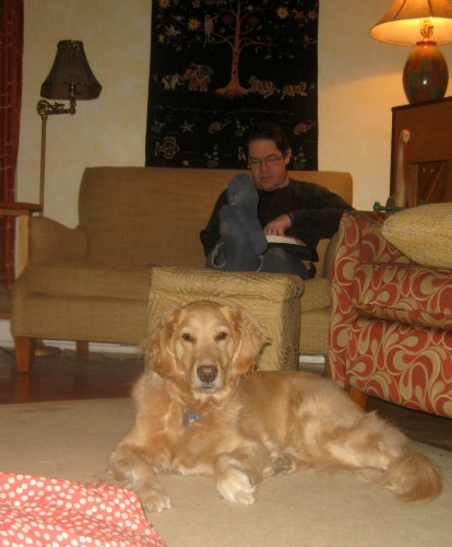 Honey the golden retriever sits in the living room.