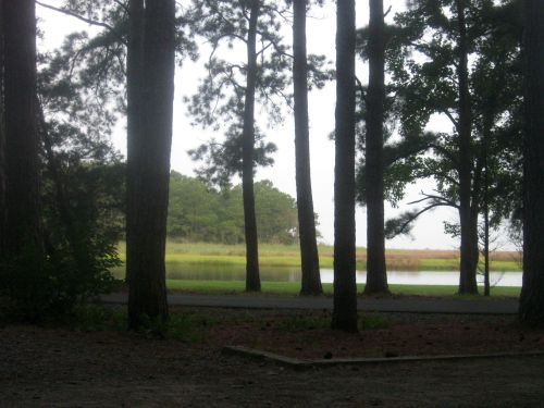 Campsite at Janes Island State Park.