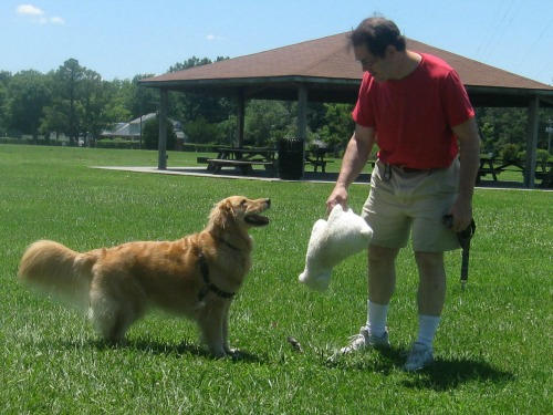 Honey the golden retriever is a good trainer.