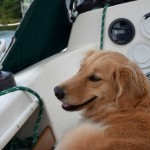 Honey the golden retriever looks out on the marina.