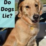 Do dogs lie?