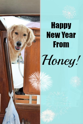 Honey the golden retriever wishes everyone Happy New Year.