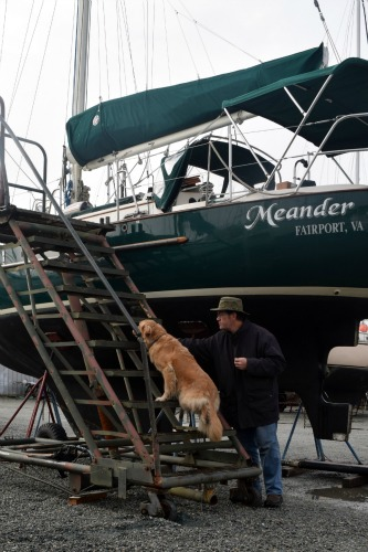 Honey the golden retriever - will she climb the boat stairs?