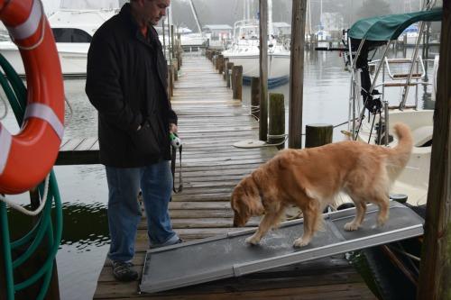 Honey the golden retriever leaves the boat on her Solvit ramp.