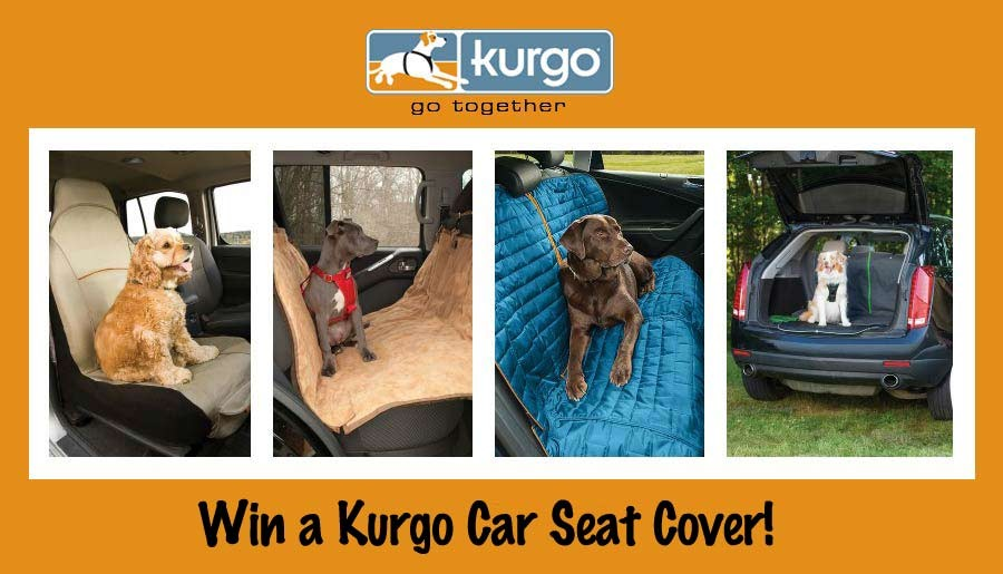 Win a Kurgo car seat cover.