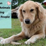 Honey the golden retriever knows you can help animals by helping their people.