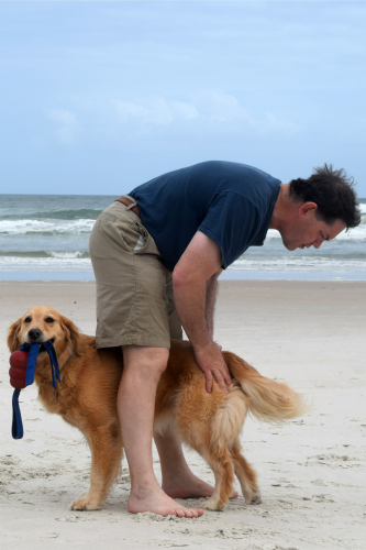 Honey the golden retriever gets scratched by Mike on the beach.