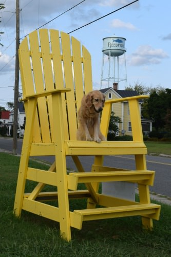 Honey the golden retrieve in big chair in Reedville.