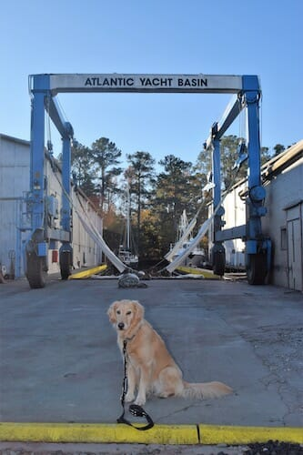 Honey the boat dog waits for Meander to be lifted into the slings.