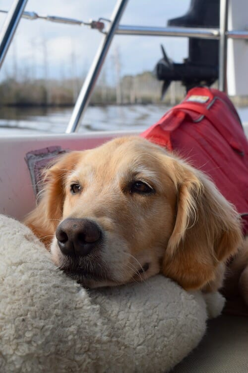 Honey the boat dog doesn't admire the view.