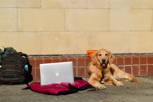 Honey the golden retriever hanging out in Charleston.