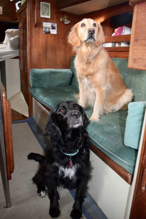 Honey the golden retriever with her friend on the boat.