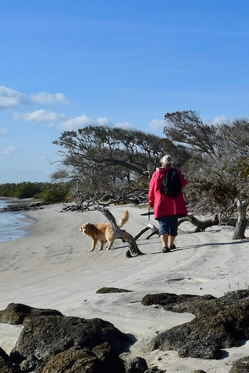 Review of 2018 on Meander (golden retriever and woman in pink jacket walking on beach