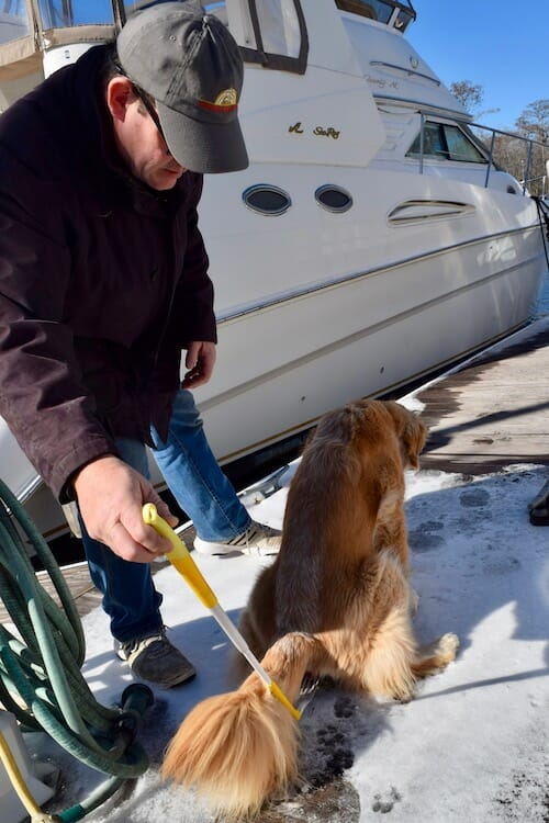 Honey the golden retriever gives a urine sample on the dock.
