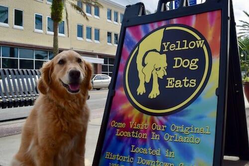 Honey the golden retriever at Yellow Dog Eats.