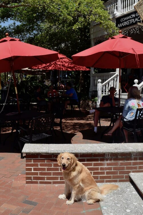 Honey wants to dine at this pet-friendly patio in Beaufort.