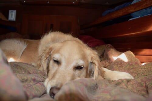 Honey the boat dog sleeps in.