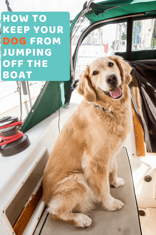 How To Keep Your Dog From Jumping Off The Boat