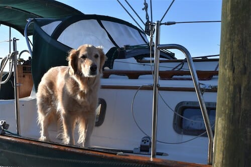 Do This To Make Your Dog's First Boat Trip A Good One