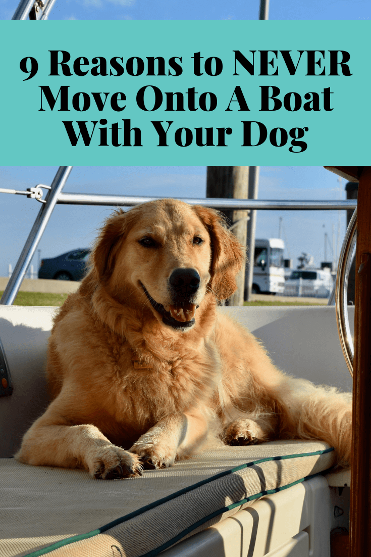 9 9 Reasons to NEVER Move Onto A Boat With Your Dog - And 1 Reason You Should