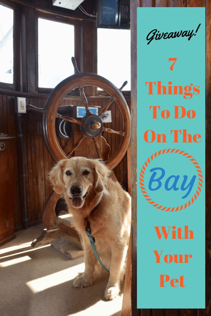7 Fun Things To Do with Pets On The Chesapeake Bay (golden retriever in boat cockpit)