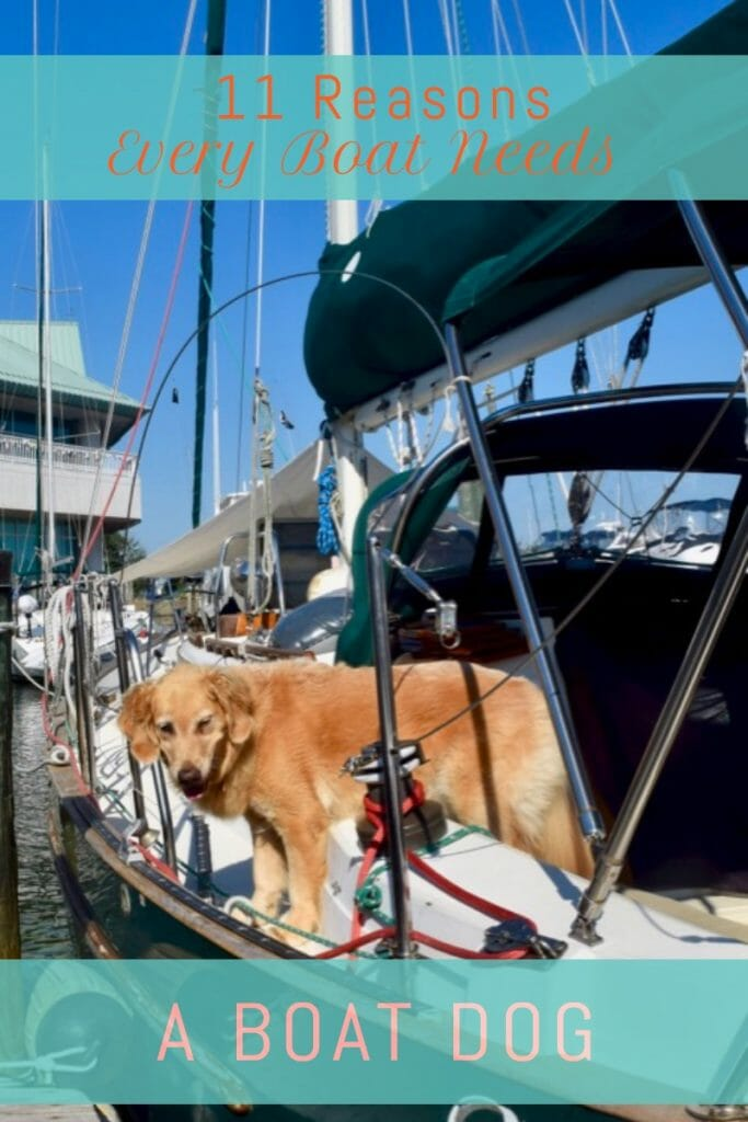Every boat needs a dog - golden retriever on a sailboat