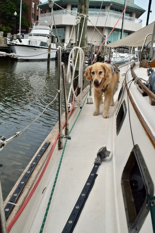 A look back at 2018 on board s/v Meander. (golden retriever on aisle of sailboat)