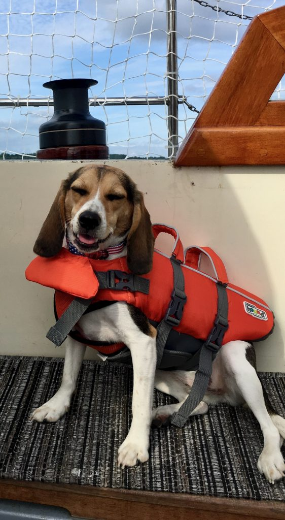 Avoiding dog disasters in rough seas (beagle in a life jacket in boat cockpit).